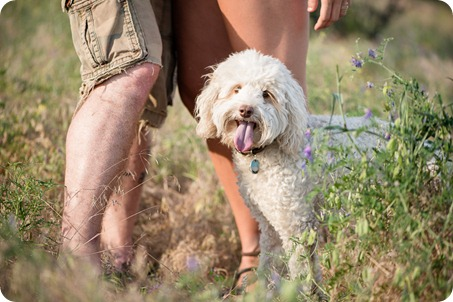 Okanagan-Lake-engagement-session_fun-couple-field-dog-wine02_by-Kevin-Trowbridge
