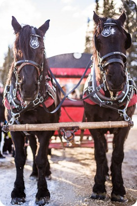 Silverstar-winter-engagement-session_horse-drawn-sleigh64_by-Kevin-Trowbridge