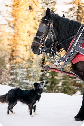 Silverstar-winter-engagement-session_horse-drawn-sleigh85_by-Kevin-Trowbridge