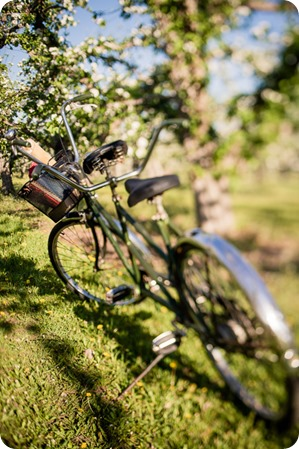 tandem-bike_engagement-portraits_apple-orchard_Kelowna_21_by-Kevin-Trowbridge