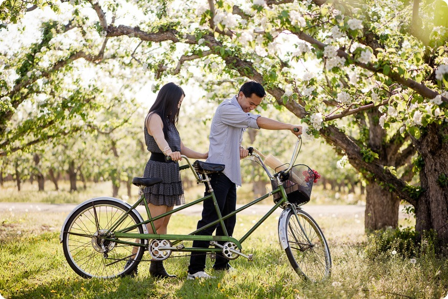 tandem-bike_engagement-portraits_apple-orchard_Kelowna_24_by-Kevin-Trowbridge