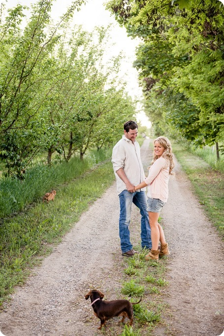 farm-engagement-session_dachshund-dogs_Okanagan_04_by-Kevin-Trowbridge