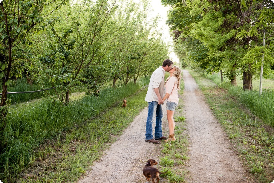 farm-engagement-session_dachshund-dogs_Okanagan_05_by-Kevin-Trowbridge