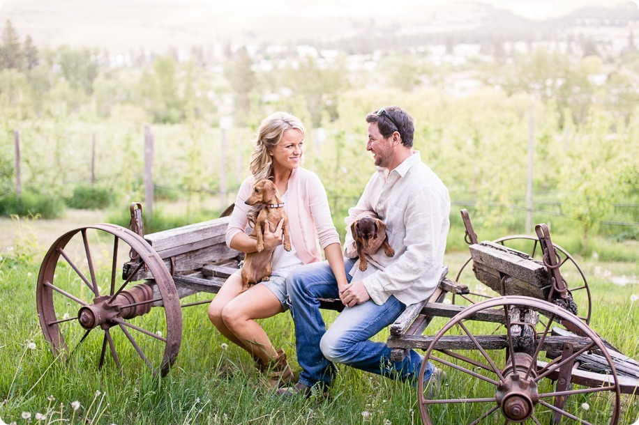 farm-engagement-session_dachshund-dogs_Okanagan_32_by-Kevin-Trowbridge