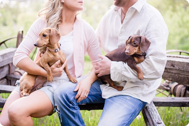farm-engagement-session_dachshund-dogs_Okanagan_33_by-Kevin-Trowbridge