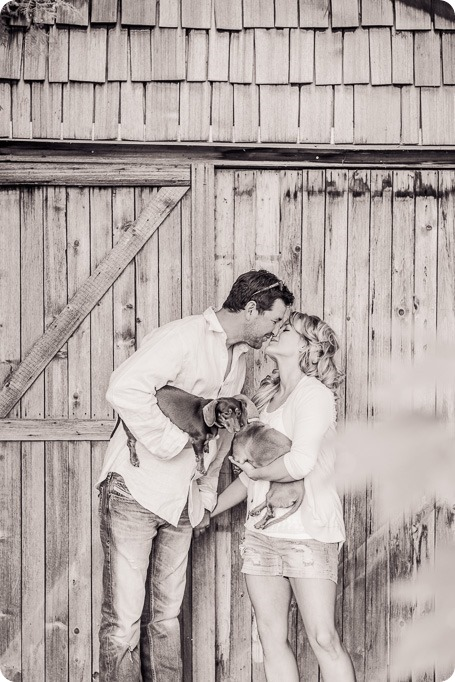 farm-engagement-session_dachshund-dogs_Okanagan_37_by-Kevin-Trowbridge