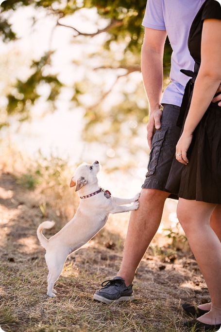 Kelowna-engagement-session_lake-dog-portraits_Okanagan-photographer_05_by-Kevin-Trowbridge