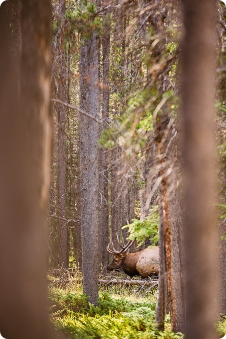 Banff-portraits_moss-forest_Fairmont-bohemian-family-session-newborn-landscape-elk_05_by-Kevin-Trowbridge