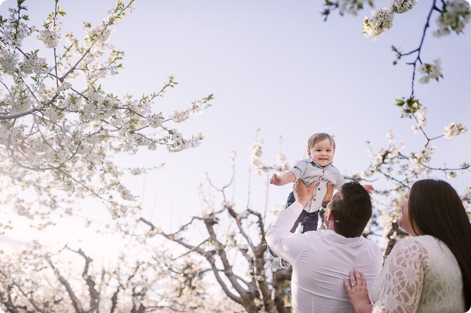 Cake-Smash_portrait-session-in-cherry-blossom-orchard_Kelowna_22_by-Kevin-Trowbridge