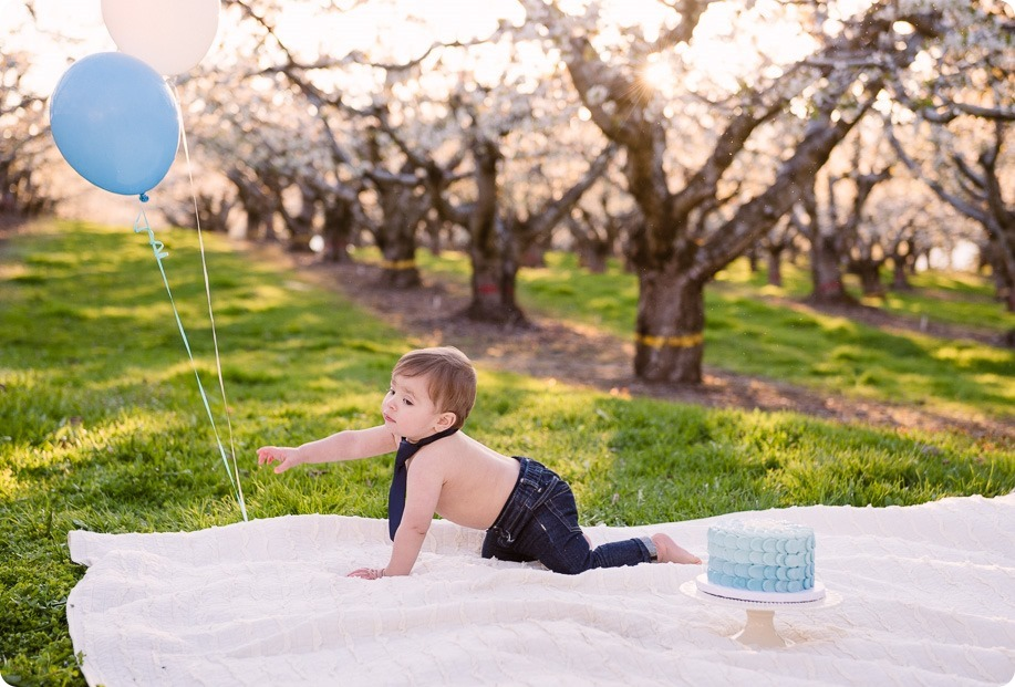 Cake-Smash_portrait-session-in-cherry-blossom-orchard_Kelowna_73_by-Kevin-Trowbridge