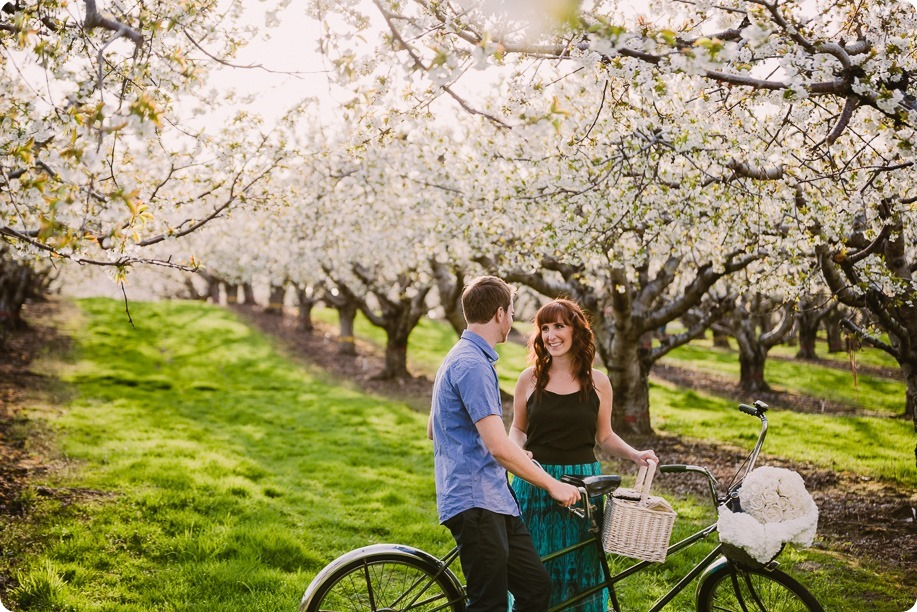 Kelowna-wedding-photographer_cherry-blossom-engagement-session_sunset-couples-portraits_tandem-bike__85652_by-Kevin-Trowbridge