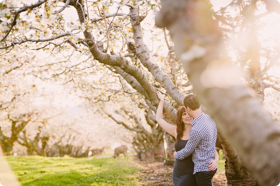 Kelowna-wedding-photographer_cherry-blossom-engagement-session_sunset-couples-portraits_tandem-bike__85975_by-Kevin-Trowbridge