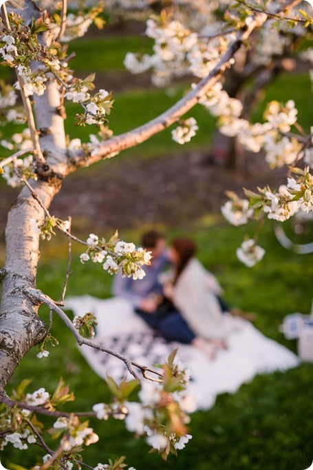 Kelowna-wedding-photographer_cherry-blossom-engagement-session_sunset-couples-portraits_tandem-bike__86109_by-Kevin-Trowbridge