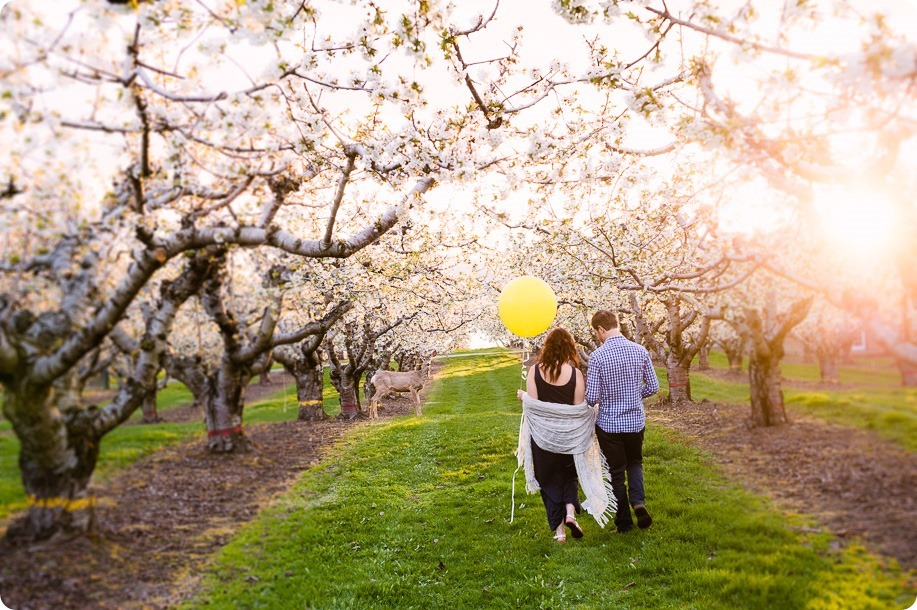 Kelowna-wedding-photographer_cherry-blossom-engagement-session_sunset-couples-portraits_tandem-bike__40375_by-Kevin-Trowbridge