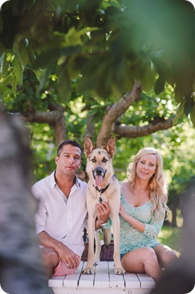 Kelowna-wedding-photographer_Cherry-orchard-engagement_dog-sunset-champagne_184814_by-Kevin-Trowbridge