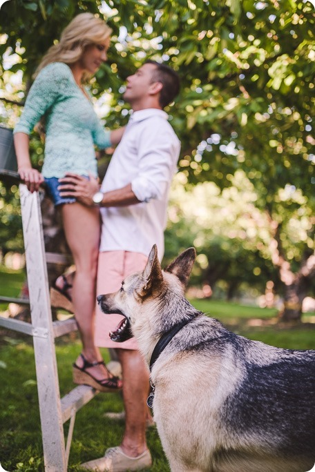 Kelowna-wedding-photographer_Cherry-orchard-engagement_dog-sunset-champagne_190754_by-Kevin-Trowbridge