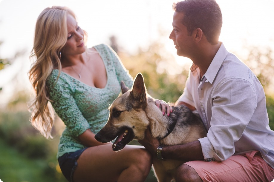 Kelowna-wedding-photographer_Cherry-orchard-engagement_dog-sunset-champagne_195836_by-Kevin-Trowbridge
